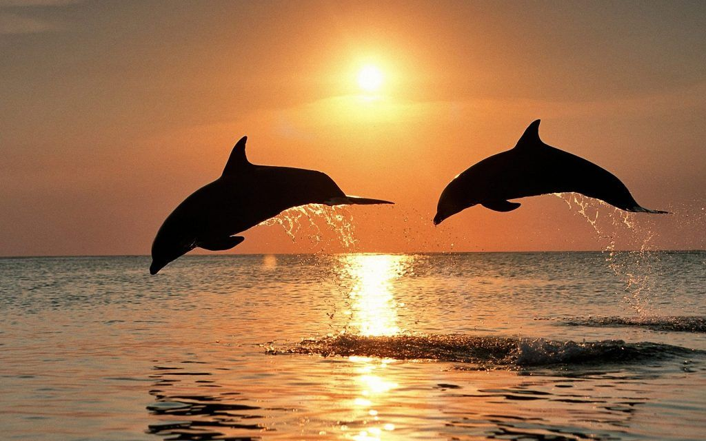 Dolphins - yourguidinglight.org