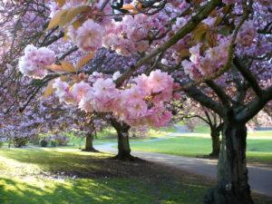 Blossom - yourguidinglight.org